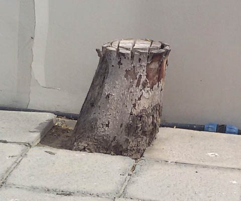 Removing tree stumps and roots while keeping the pavement intact